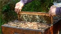 Profitez du confinement pour observer les insectes pollinisateurs