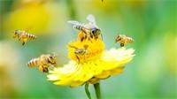 Pollinizz : une exposition au bon goût de miel