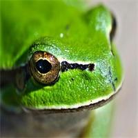 Vous manquez de ressort, Vittel célèbre la grenouille !