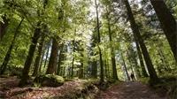 La randonnée des forestaux