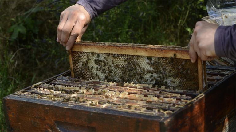 Un concours pour valoriser les miels de Lorraine