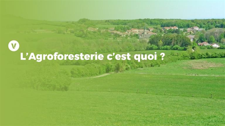 L'agroforesterie, c'est quoi ?