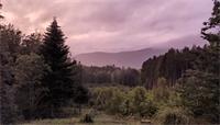 Du 2 au 4 juillet : les forêts de La Grande Fosse et de Tiragoutte s'animent