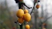 7500 arbres fruitiers plantés avec l'aide du Département