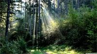 Quand l'agriculture s'inspire de la forêt