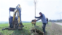 Paysage : le Département replante des arbres d'alignement