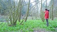 Tignécourt: Une forêt qui semble avoir trouvé son équilibre