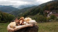 Vélo et fromage : les Vosges sur un plateau