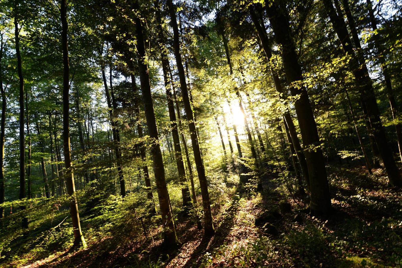 N'oubliez de faire un petit tour en forêt !
