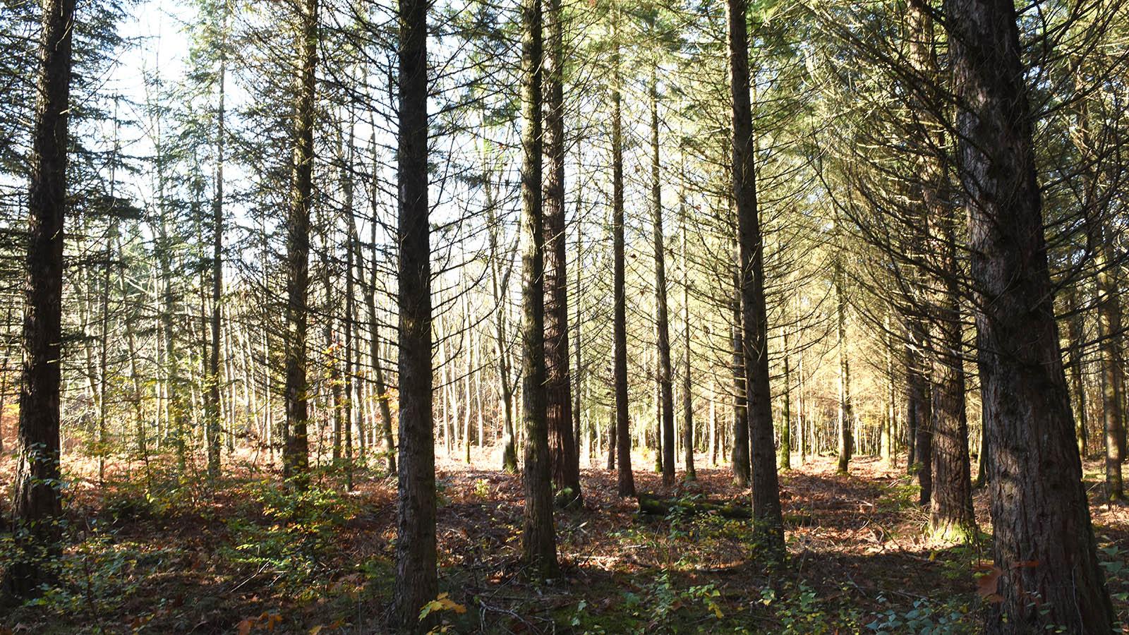 porfolio_forêt_003