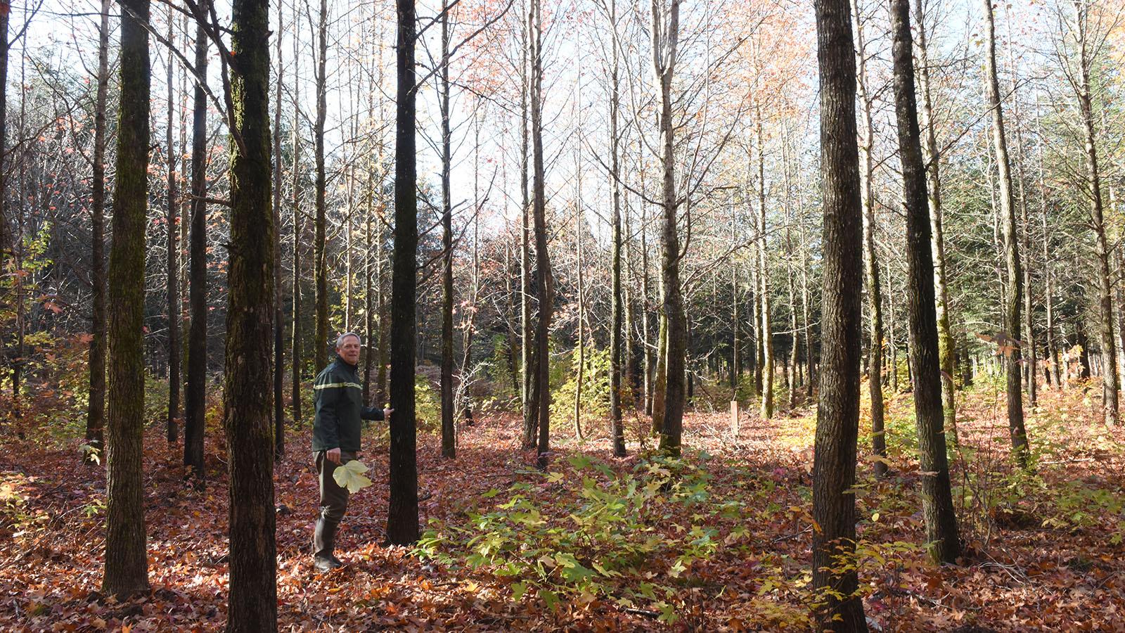 porfolio_forêt_011